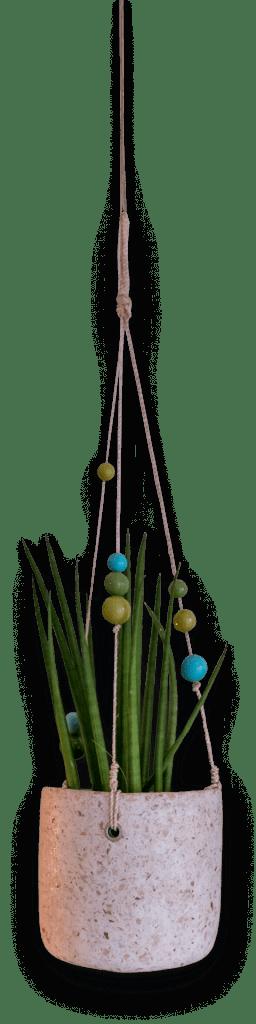Hangplant Lichtenvoorde